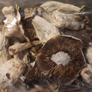 mushroom strains and effects, mushroom strain reviews, exotic mushroom spores Arkansas, Kentucky, New Jersey, Tennessee.